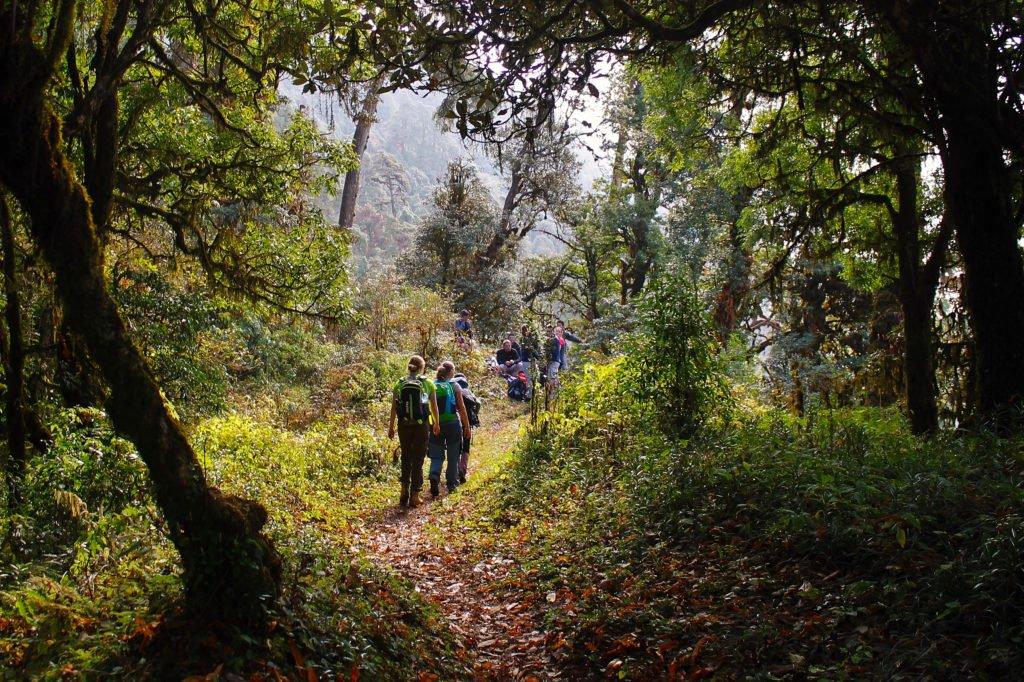 Vandringresa Nepal. Gäster vandrar på en stig i skogen.