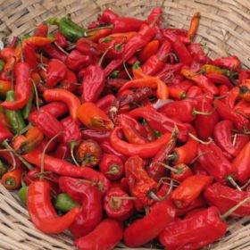 Chili, en huvudingrediens i maten i Bhutan