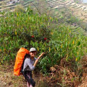Vandring i Nepal, kvinnlig guide visar vägen