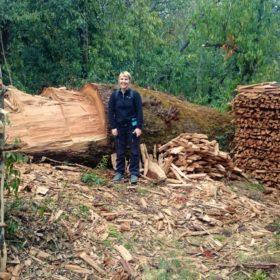Vandring i Nepal, enormt träd har huggits ned för hand med yxa
