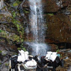 Jakar tar en drickapaus vid ett vattenfall