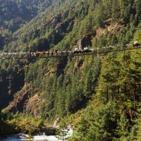 hängbro med jakar - Everest Base Camp