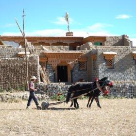 Resa Tibet och Nepal, en tibetansk man arbetar med sin häst på ett fält