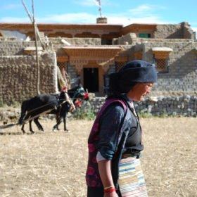 Rundresa Tibet. En man och en kvinna arbetar på sin åker framför sitt hus