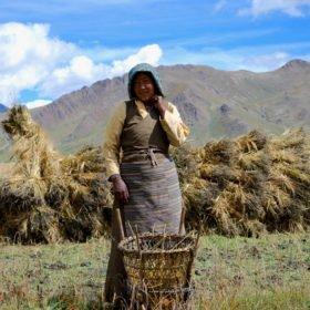 Rundresa Tibet, en ung kvinna tar en paus från arbetet på åkern