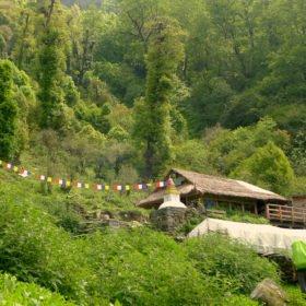 Vandringsresa Nepal. Boende med stråtak i grönskande landskap.