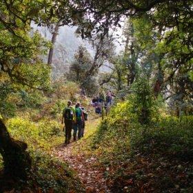 Tjejresa Nepal, vandring genom rhododendronskog