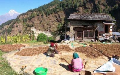 vandringsresa Nepal