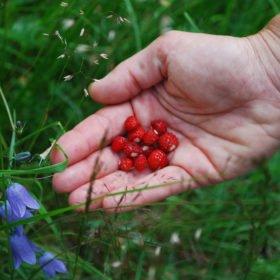 Äventyr i Sverige, smultron och blåklockor