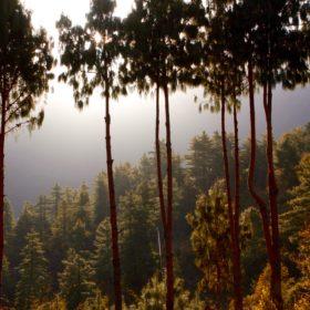 Annapurna Base Camp, skog
