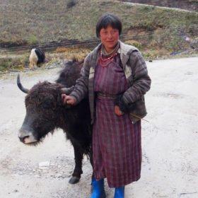 Bhutanresa, kvinna med jak