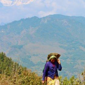 Gruppresa Nepal, kvinna vandrar med berg bakom sig
