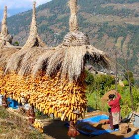 Gruppresa Nepal, kvinna arbetar i en by