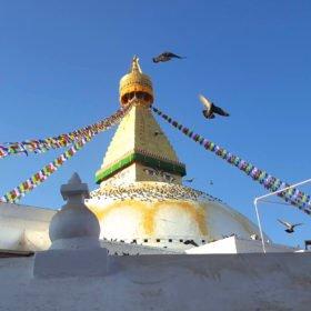 Paddlingresa i Nepal, en buddistisk stupa i Katmandu, duvor och böneflaggor