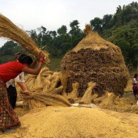 risskörd rundresa Nepal