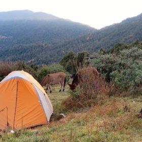 Tält och hästar på Bhutan vandring