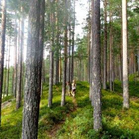 barn i skogen på familjeäventyr