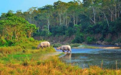 djurvänlig turism, noshörningar i Nepal