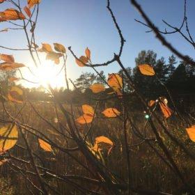 orangea höstlöv