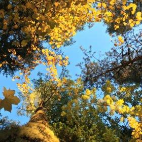 träd underifrån på skogsbad och yoga