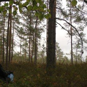 skogsbadare sitter vid ett träd