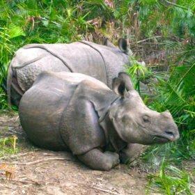 noshörningar på skräddarsydd resa i Nepal