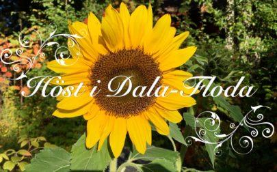 Höst i Dala-Floda