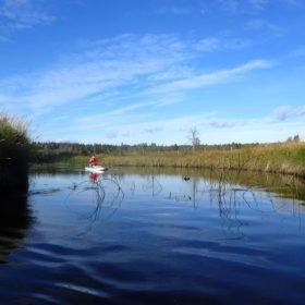 SUP-paddling på liten å