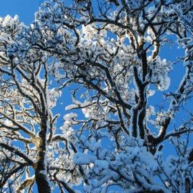 vinterträd skogsbad