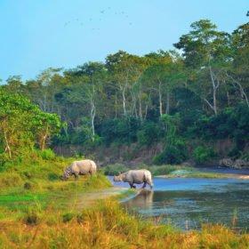 noshörningar i Nepal